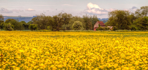 Fiddleford Manor buttercups landscape HDR