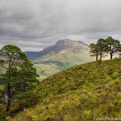 Beinn Eighe woodland walk