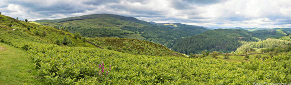 Panorama view of Coed y Brenin ('King's Forest') and Bryniau Glo